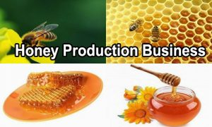 Innovative business ideas- Honey Production business